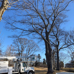 Specialty Tree Services